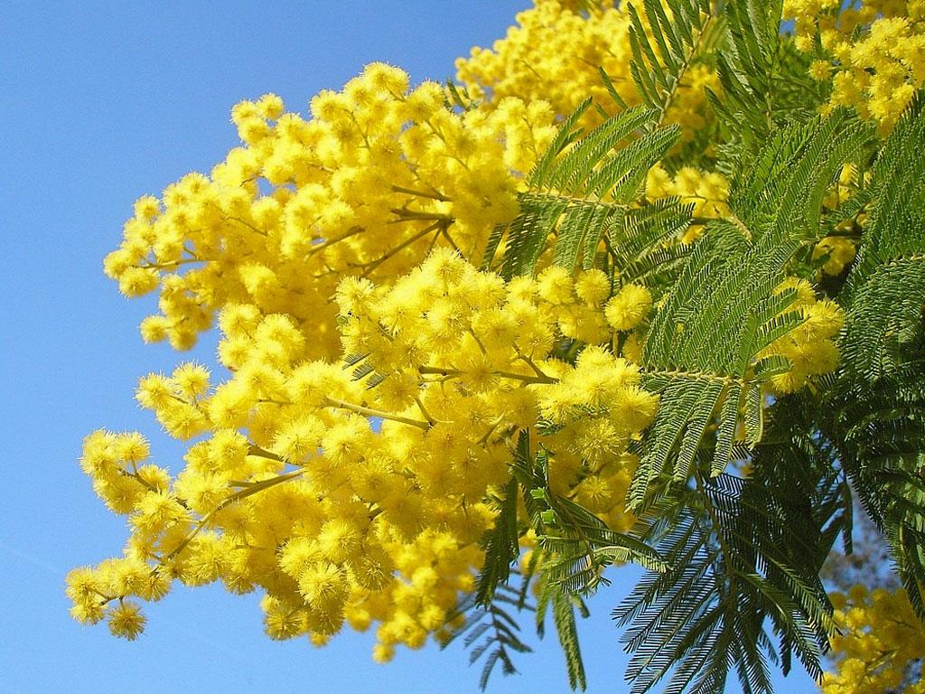 Festa della donna perch non regalare una coccola - Immagine dell albero a colori ...