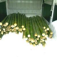 Vendo canne di bambù bambu bamboo da bambuseto in Piemonte